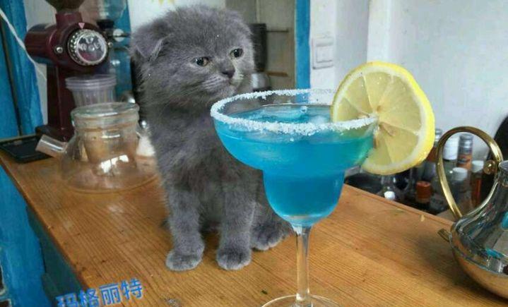 竹里馆猫咪咖啡吧