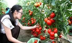犀牛小菜园-有机蔬菜采摘