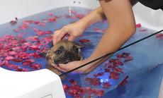 麦乐宠小型犬洗护