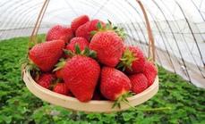 艺馨草莓园99元三人服务