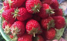 国良草莓采摘50元代金券