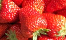 玲姐四方达草莓采摘园