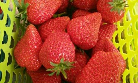 京豫草莓采摘园(西官庄店)