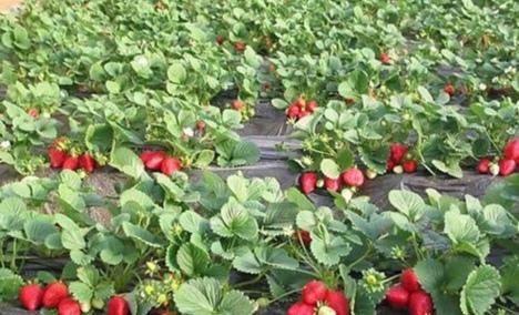 老徐苹果采摘园