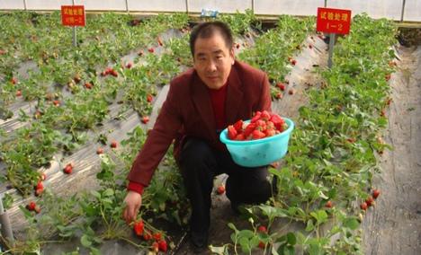 金潍多草莓采摘园