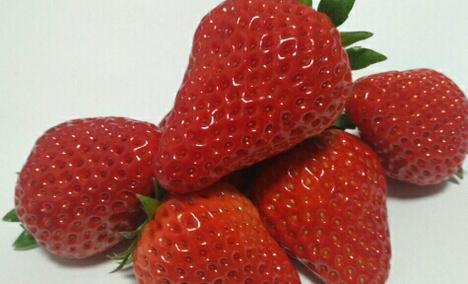 福缘草莓采摘园