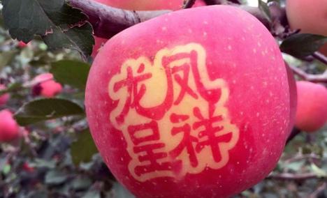 永发苹果采摘园