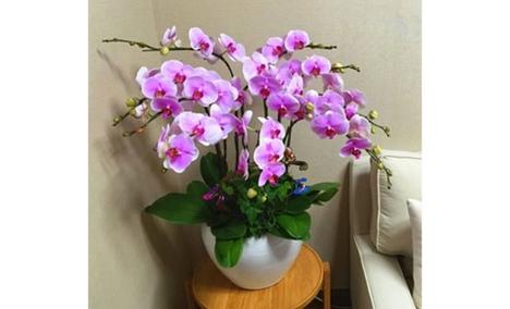 爱情密码鲜花