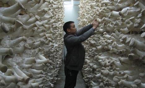 食用菌专业合作社