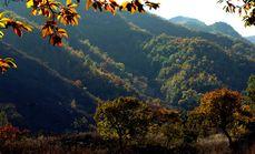 云蒙山国家森林公园成人票