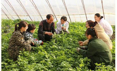 荣发农业观光有机草莓采摘园