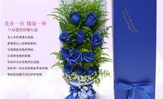 梓怡花坊11朵蓝色妖姬礼盒