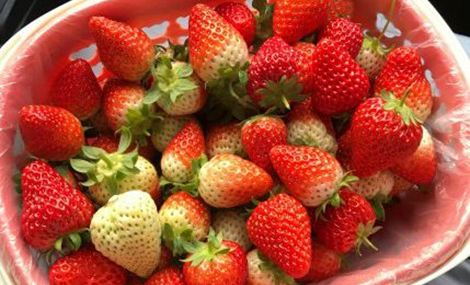 小武草莓采摘园