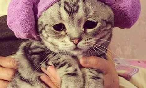 宠尚猫咪生活馆