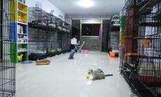 净夜猫禅猫咪工作室(民清路店)