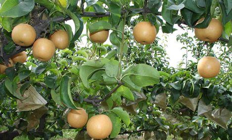 香果满园种植场
