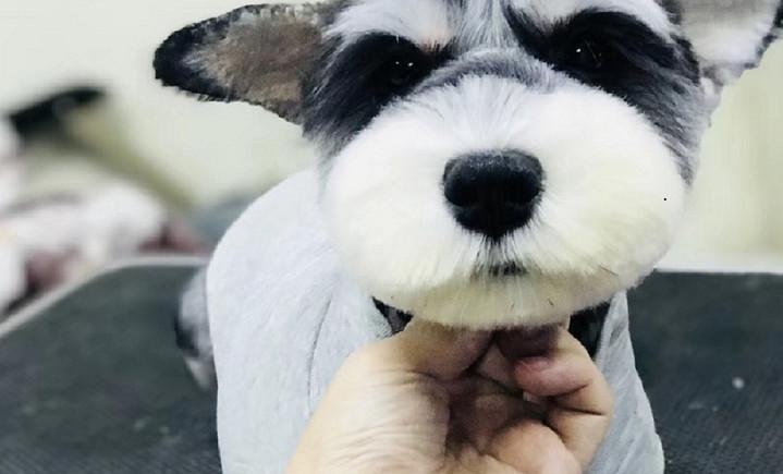 源一宠物诊所 - 大图