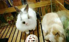 宠物兔专门店宠物用品