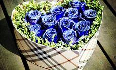 卉香园11朵蓝色妖姬礼盒