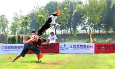 江润宠物乐园幼犬初级