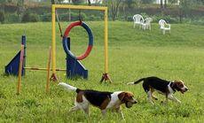 江润宠物乐园大型犬寄养1天