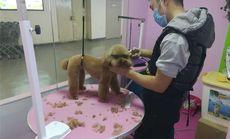 爱诺宠物小型犬洗澡套餐