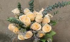 520鲜花1朵精品玫瑰