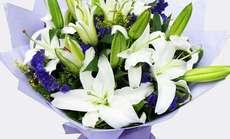 卉香园11朵白百花束套餐