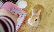 小兔当家兔兔洗澡
