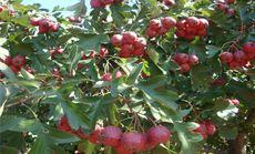城市农夫花木果蔬生态产业基地