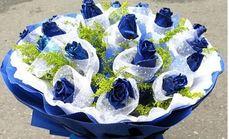 清馨花苑19朵蓝色妖姬花束