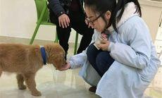 新津安琪儿宠物医院