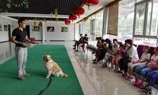 宠物训练幼犬班