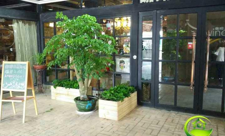林艺花卉销售租赁服务