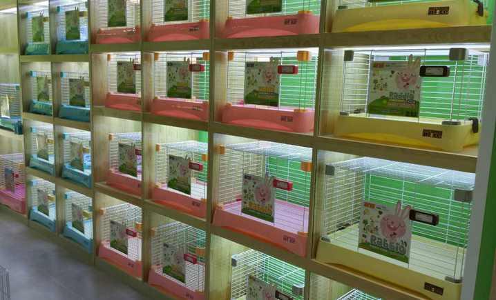 宠物兔专门店(天丰利店) - 大图
