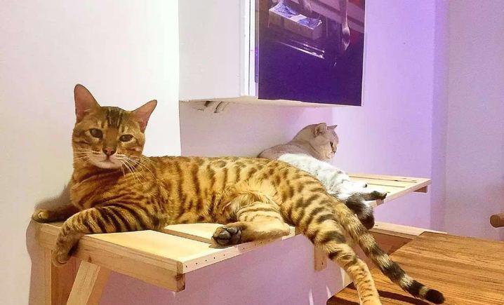 喵了个咪猫咪主题咖啡厅