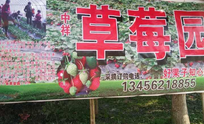 中祥草莓园