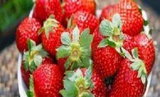大自然草莓有机草莓采摘4斤