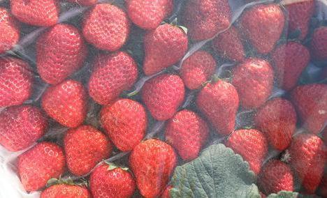 昌金草莓种植园