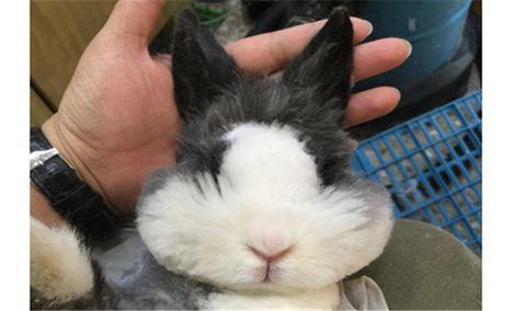 兔小兔萌宠屋(三里屯店)