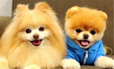 三只狗宠物生活馆