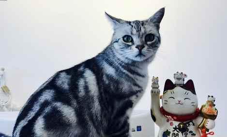猫托邦猫咪寄养酒店