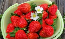 子奕草莓采摘两斤