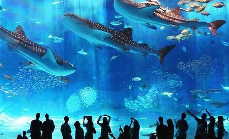 罗源湾海洋世界特惠票