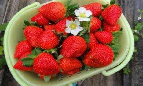 优优草莓采摘园