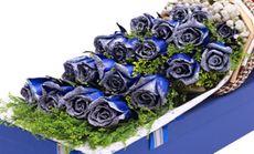 玫瑰之约蓝色妖姬19朵