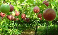 奇异果园家庭农场
