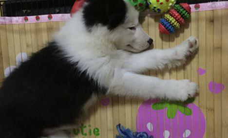 萌哚宠物生活馆