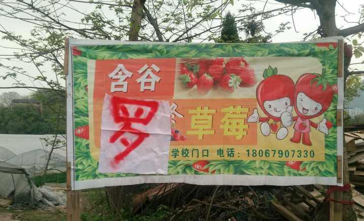 含谷罗草莓(宝洪店)