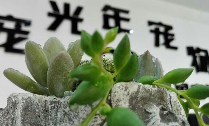 宠光年宠物(百合山庄店)